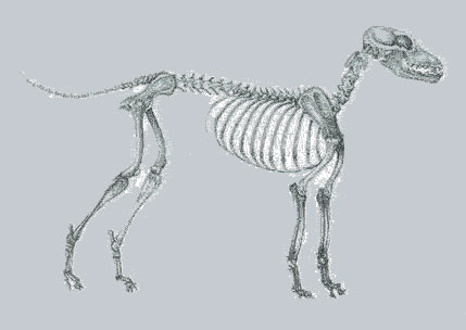 dog-skeleton