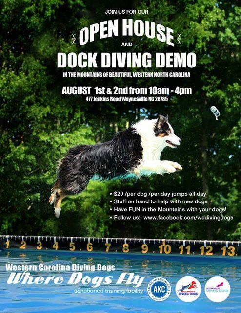 Dog and Dock Diving